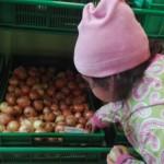 Wyprawa po cebulę. To były pierwsze zakupy Asi