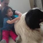 Powolutku nabrała zaufania do takiego wielkiego psa!